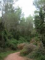 bosc de les animes